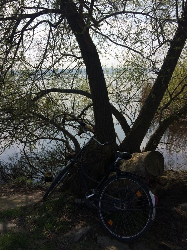 Fahrrad Zitty Brandenburg