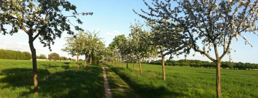 mundraub.org Äpfel selbst pflücken