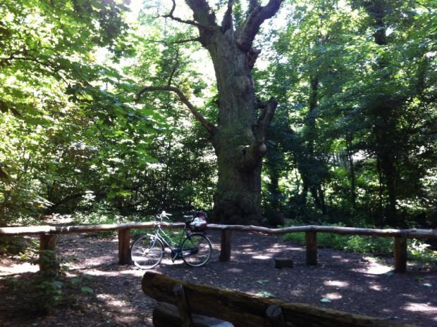 Baum Ausflug ohne Auto