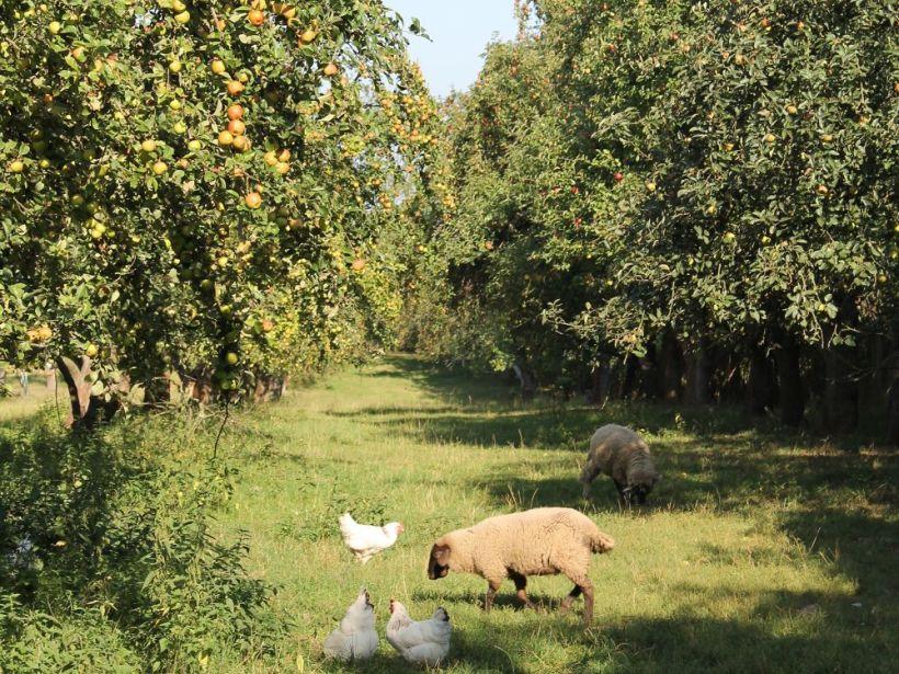 Apfelhof Wähnert