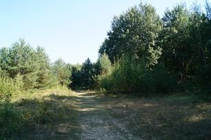 Wald Baumberger Dünen Tegel Ausflug