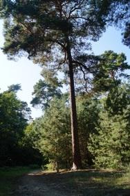 Wald Baum Ausflug Natur