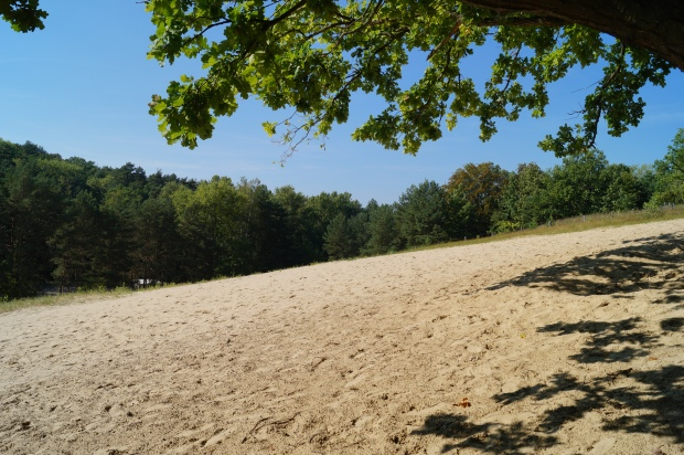 Dünen Wald Brandenburg