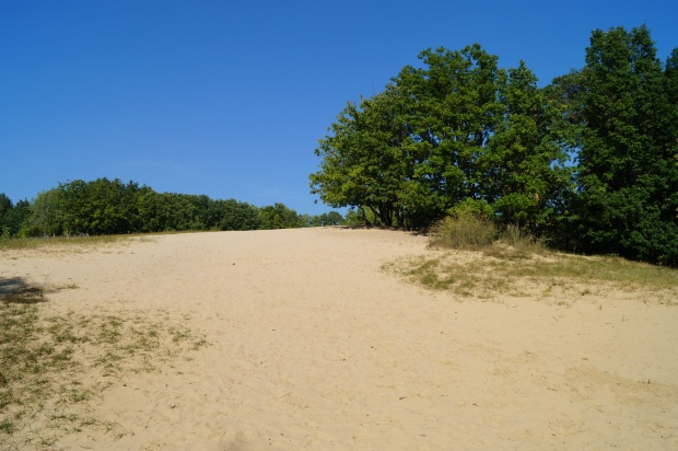 Wald Sanddüne Ausflug