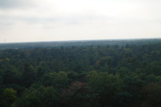 Herbst Ausblick Baumkronenpfad