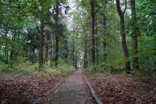 Wald Beelitz Heilstäten
