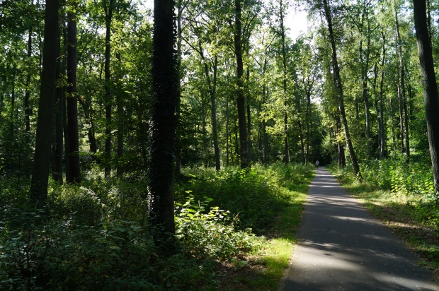 Radweg Wald