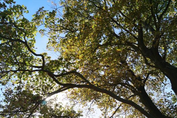 Herbst Baum Ausflug