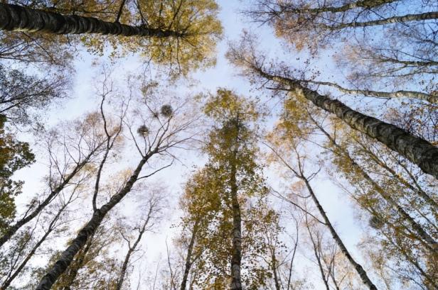 Bäume Naturpark Barnim