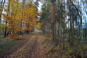 Naturpark Barnim Waldweg