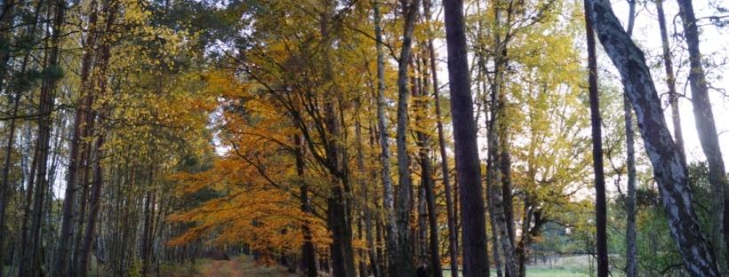 herbst Barnim Naturpark