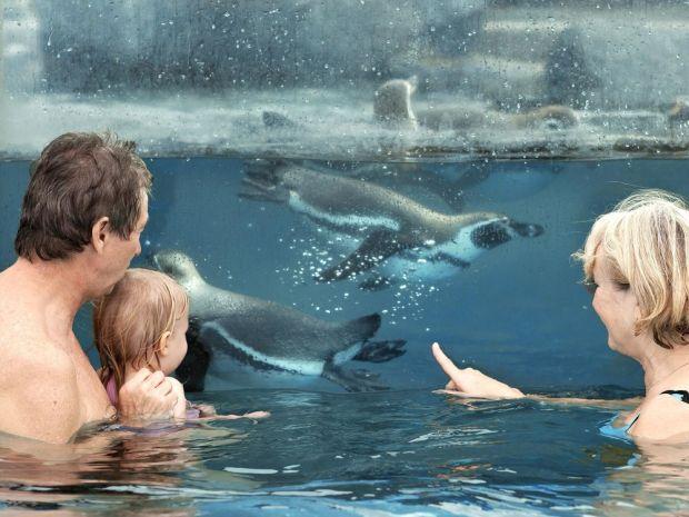Pinguine schwimmen brandenburg