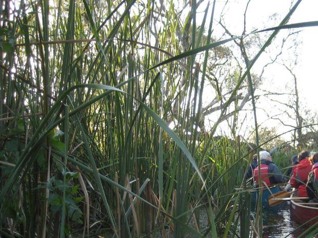 Kanu Nationalpark Unteres Odertal