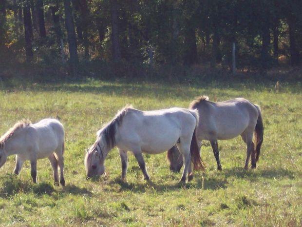 Pferde Ausflug Familie
