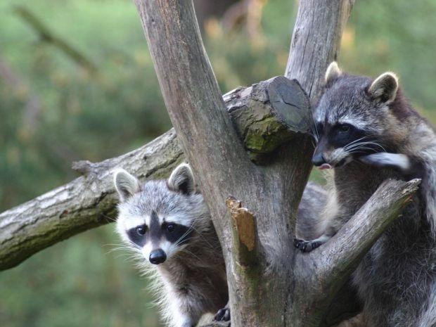 Wildpark Schorfheide Chorin Tiere